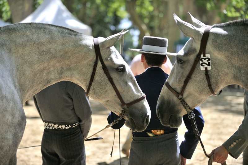 rencontres-equestres-beaucaire