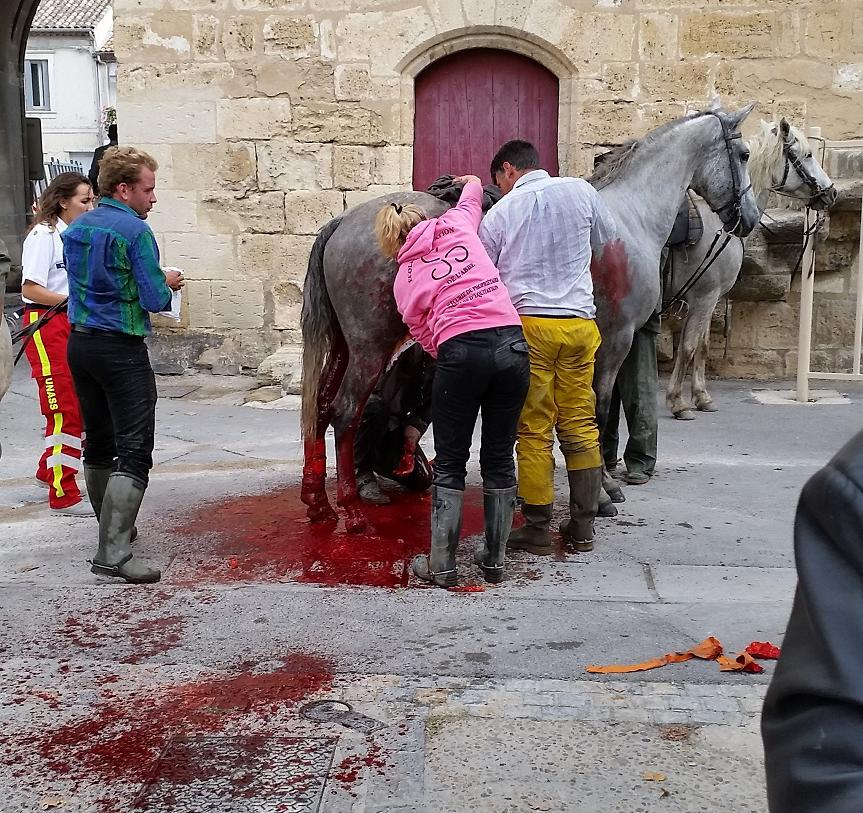 Photo of AIGUES-MORTES Un cheval s'empale sur un piquet métallique pendant l'abrivado