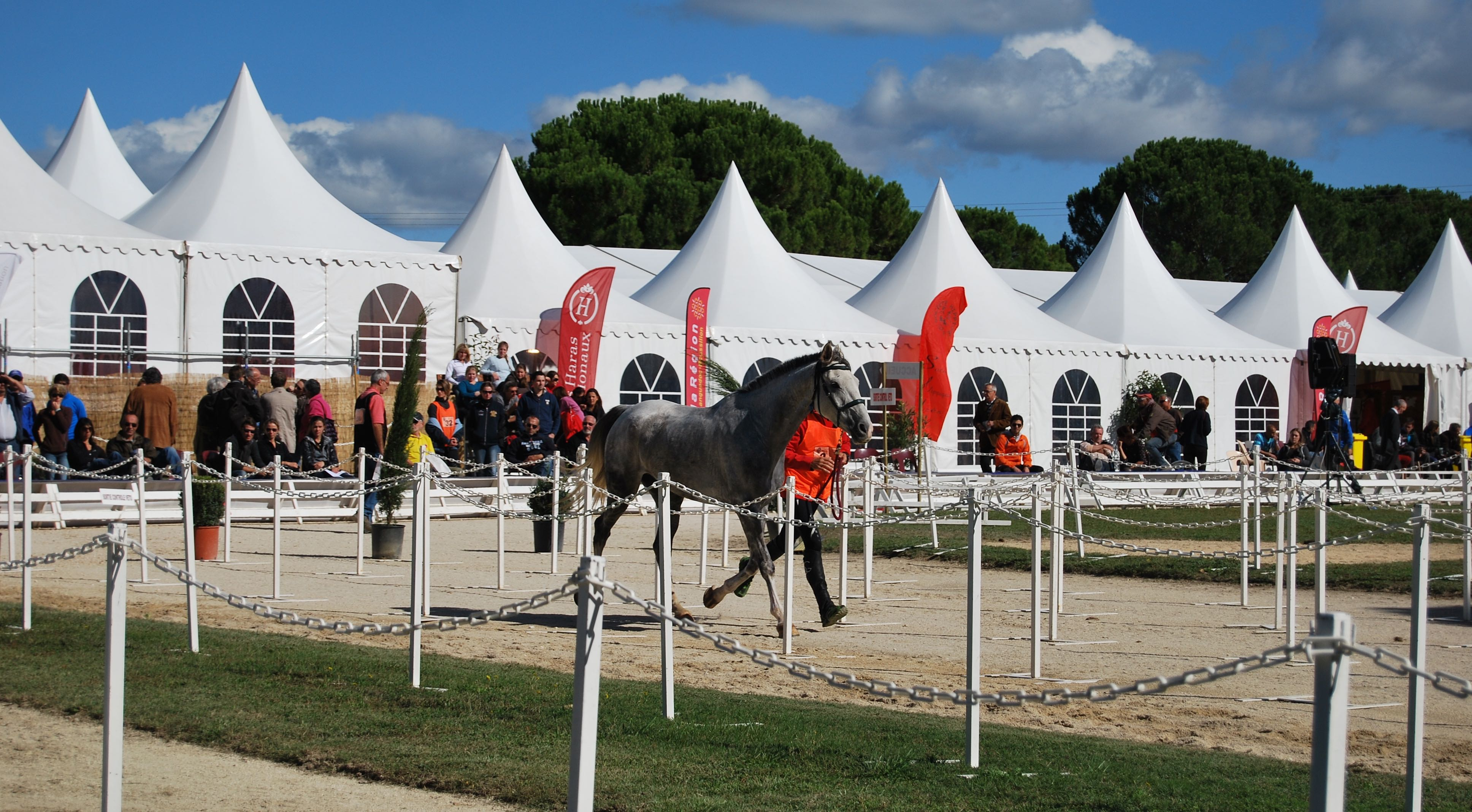Photo of UZÈS L'élite de l'endurance équestre a rendez-vous au Haras national