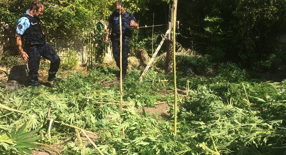Photo of AIGUES-MORTES 90 kg de cannabis découverts chez un commerçant