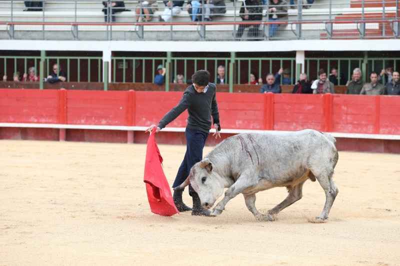 Solal, petit torero aux grandes ressources (Photo Anthony Maurin)