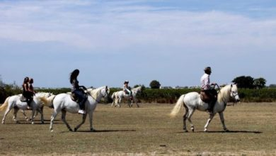 Photo of AIGUES-MORTES Les chevaux s'emballent : cinq blessés