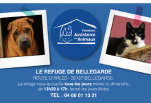 Photo of BELLEGARDE Salsa et Izore vous attendent au refuge