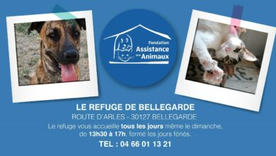 Photo of BELLEGARDE Haya et Canto vous attendent au refuge