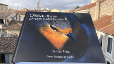 Photo of GARD Les oiseaux détaillés par la passion de Christian Philip